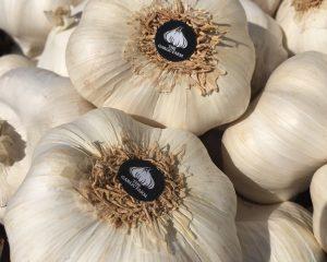 Garlic Farm